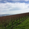 Bianchi Bench Central Coast Vineyard