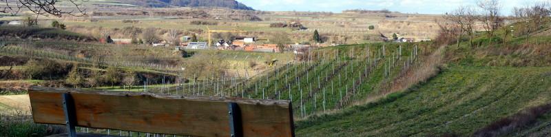 Blick vom Kaiserstuhl auf den Weinbauort Eichstetten