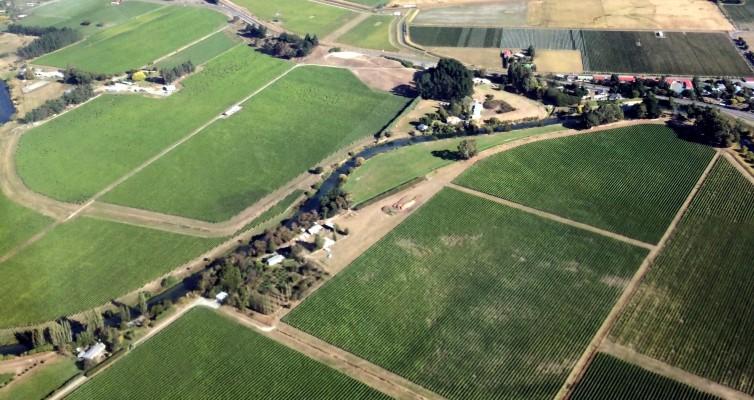 Die Erfolgsgeschichte des Weinbaus in Neuseeland – wie der Sauvignon Blanc nach Marlborough kam!